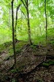 Luz del sol a través del bosque verde Fotografía de archivo libre de regalías