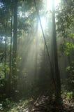 Luz del sol a través del toldo de árbol de la selva tropical Fotografía de archivo libre de regalías