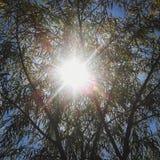 Luz del sol y árbol durante verano Imagen de archivo