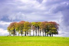 Luz del sol y árboles Fotografía de archivo libre de regalías