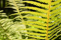 Luz del sol y hoja verde en el bosque profundo Imágenes de archivo libres de regalías