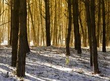 Luz del sol y sombras de la mañana en el bosque Imagenes de archivo