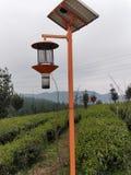 Luz del té de la tarde fotografía de archivo