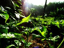 Luz del verde Fotografía de archivo libre de regalías