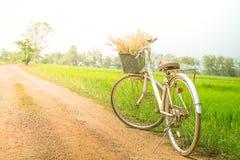 Luz do alargamento do campo da bicicleta e do arroz Fotos de Stock Royalty Free