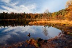Luz do amanhecer na lagoa da floresta Fotografia de Stock