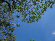Luz do céu através da copa de árvore Fotografia de Stock