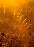 Luz do dia Foto de Stock