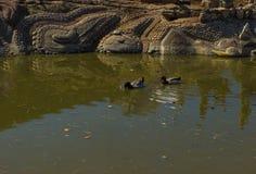 Luz do dia do verão da mola da lagoa da cidade Fotografia de Stock