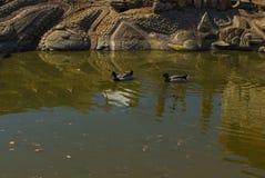 Luz do dia do verão da mola da lagoa da cidade Imagens de Stock