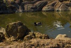 Luz do dia do verão da mola da lagoa da cidade Imagem de Stock