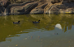 Luz do dia do verão da mola da lagoa da cidade Foto de Stock