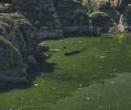 Luz do dia do verão da mola da lagoa da cidade Fotos de Stock