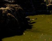 Luz do dia do verão da mola da lagoa da cidade Foto de Stock Royalty Free