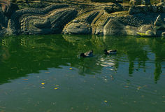 Luz do dia do verão da mola da lagoa da cidade Imagem de Stock Royalty Free