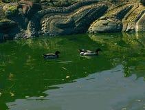 Luz do dia do verão da mola da lagoa da cidade Imagens de Stock Royalty Free