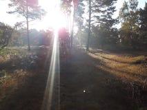 Luz do diamante entre a árvore Imagens de Stock Royalty Free