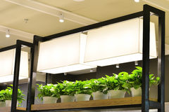 Luz do diodo emissor de luz usada para crescer a planta e a flor Fotos de Stock