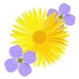 Luz do miosótis - Viola Flower azul e margarida amarela isoladas no fundo branco ilustração stock