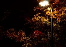Luz do parque que brilha embora as folhas de outono fotografia de stock royalty free