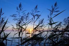 Luz do por do sol Imagem de Stock