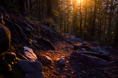 Luz do por do sol em Willow Creek Trail fotografia de stock
