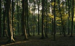 Luz do por do sol na floresta verde Fotografia de Stock Royalty Free