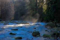 Luz do rio da floresta   Imagem de Stock