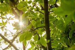 Luz do sol através das árvores e das folhas imagens de stock