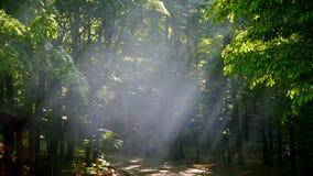 luz do sol através das folhas Raias de Sun na floresta vídeos de arquivo