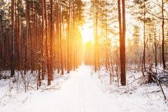 Luz do sol bonita surpreendente do sol do nascer do sol do por do sol no inverno ensolarado nevado Imagem de Stock