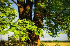Luz do sol brilhante Imagens de Stock