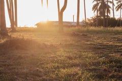 Luz do sol com árvores de coco Foto de Stock