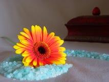 Luz do sol da mola Fotos de Stock Royalty Free