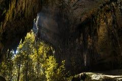 Luz do sol dentro da caverna na selva da floresta fotos de stock