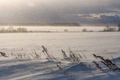 Luz do sol do blizzard e tempo dramático ventoso em prados do inverno Imagem de Stock
