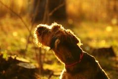 Luz do sol do bom dia, o começo de um dia novo Fotografia de Stock