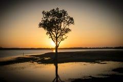 A luz do sol do couro cru da árvore dentro do rio, nivelando Imagens de Stock