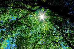 A luz do sol na árvore das filiais fotos de stock royalty free