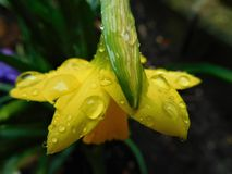Luz do sol na chuva imagem de stock