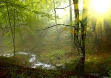 Luz do sol na madeira Fotos de Stock Royalty Free