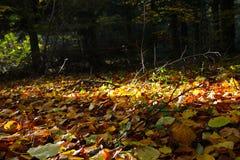 Luz do sol no assoalho da floresta fotografia de stock royalty free