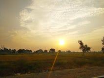 Luz do sol no campo fotografia de stock royalty free