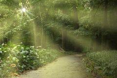 Luz do sol no parque Imagens de Stock Royalty Free