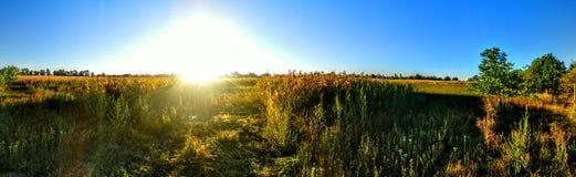 Luz do sol nos campos sping fotografia de stock royalty free