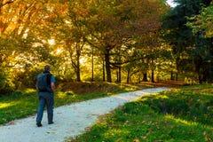 Luz do sol do outono tarde na tarde fotos de stock royalty free