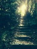 Luz do sol que filtra através das folhas Imagens de Stock