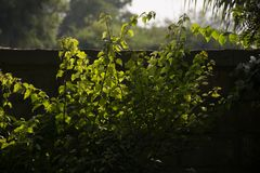 Luz do sol que guia as folhas Foto de Stock Royalty Free