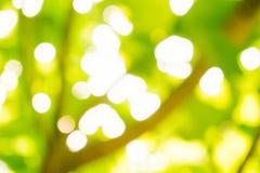 Luz do sol verde Fotos de Stock