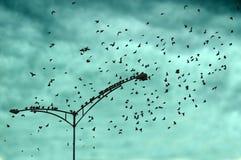 Luz dos pássaros no cargo da lâmpada Fotos de Stock